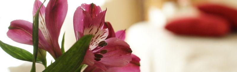 Ananda Content Image 2